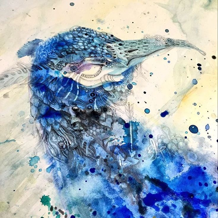 Best 25 peacock blue paint ideas on pinterest peacock for Best peacock blue paint color