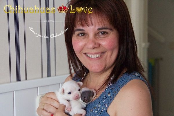 Chihuahuas Love - Cachorros Chihuahua. Fotos Cachorros Nueva Camada.