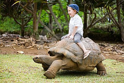 Things to do on the sunshine coast    Giant Turtle Racing  #airnzsunshine