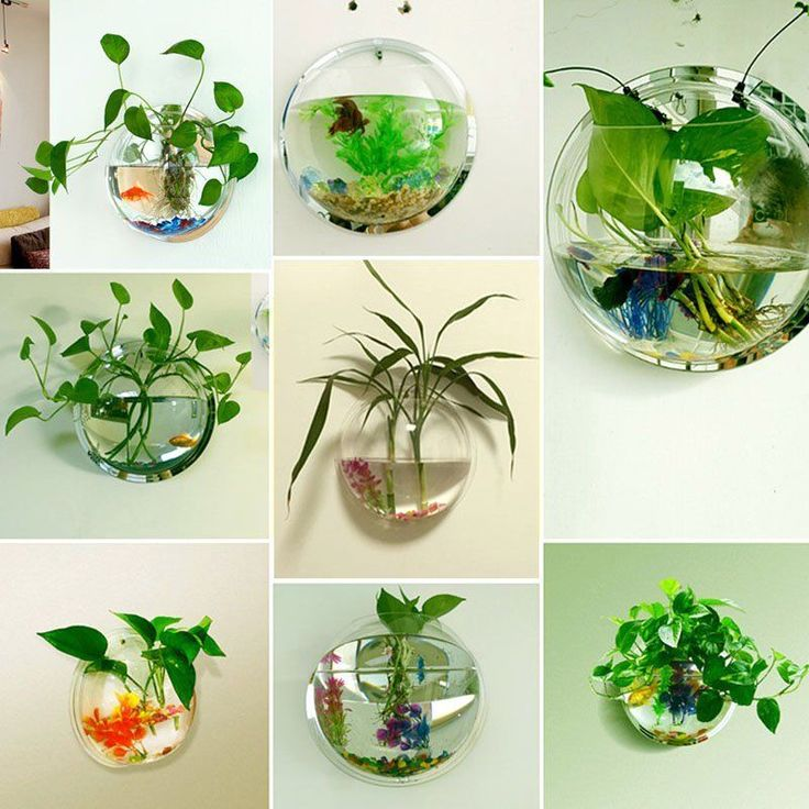 Best 25 fish tank wall ideas on pinterest aquarium in for Fish bowl with plant on top