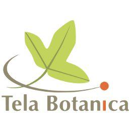 Actualités de Tela Botanica