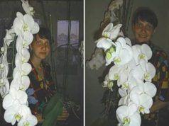 Így ültettem át az orchideám, azóta sem győzöm csodálni!