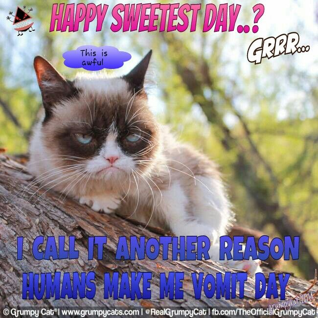 Funny Sweetest Day Meme : Best my grumpy cats through images on