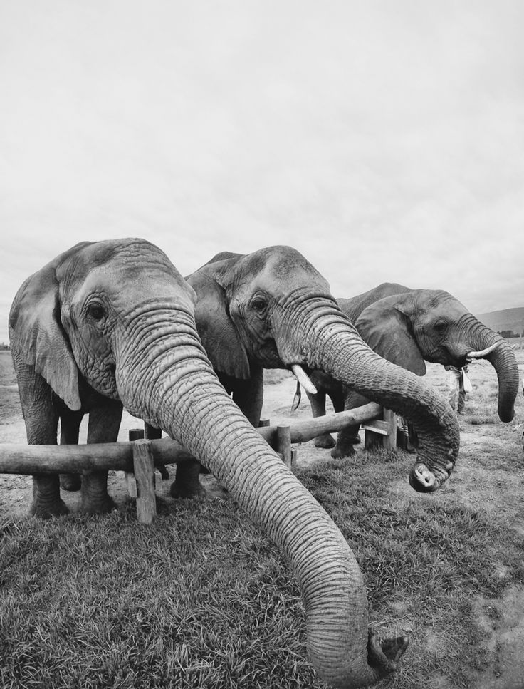 knysna elephant sanctuary, south africa