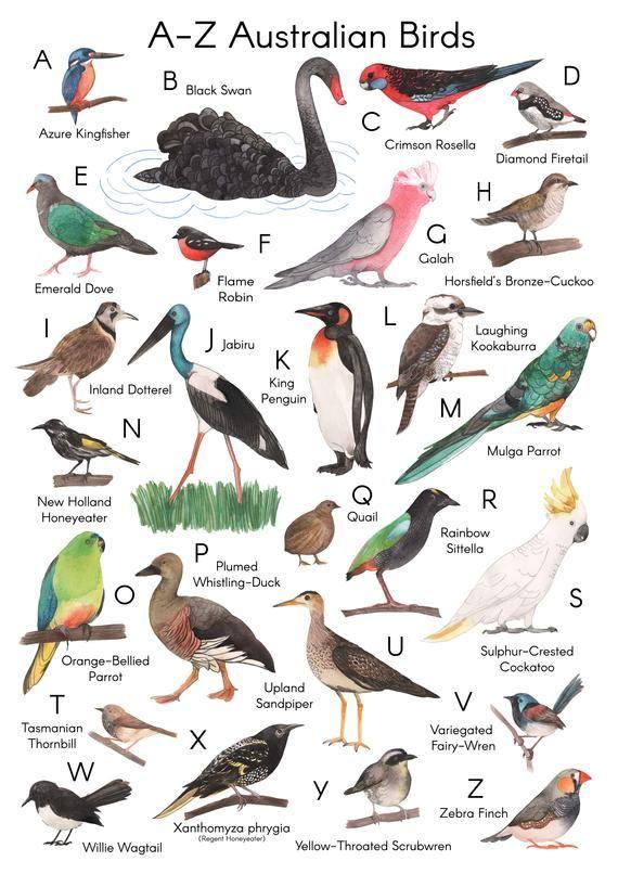 Australian Birds A Z Art Print Giclee Print Etsy In 2021 Australian Birds Bird Art Print Bird Art