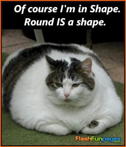 Fattest Dog In The World | Fattest Cat In The World | funny shit ... Fattest Animal In The World