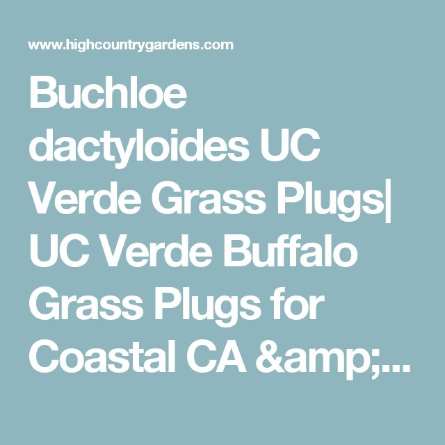 Buchloe dactyloides UC Verde Grass Plugs| UC Verde Buffalo Grass Plugs for Coastal CA & Desert SW | Low Water Plants, Eco Friendly Landscapes | Lawns from High Country Gardens