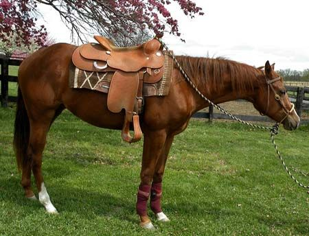 The  Best Horses For Lease Ideas On   Horse Quotes