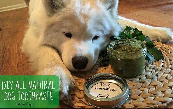 Natural Medicine For Dog Allergies