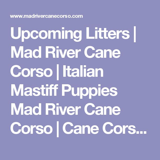 Upcoming Litters | Mad River Cane Corso | Italian Mastiff Puppies Mad River Cane Corso | Cane Corso Breeder | Cane Corso Puppies for Sale