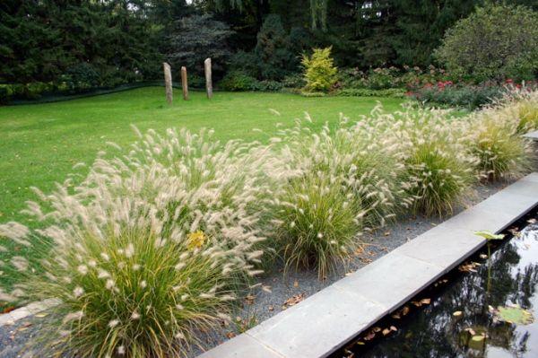 die besten 17 ideen zu ziergr ser auf pinterest mehrj hrige pflanzen gr ser und lila pflanzen. Black Bedroom Furniture Sets. Home Design Ideas