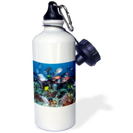 3dRose Tropical Coral Reef Fish, Sports Water Bottle, 21oz