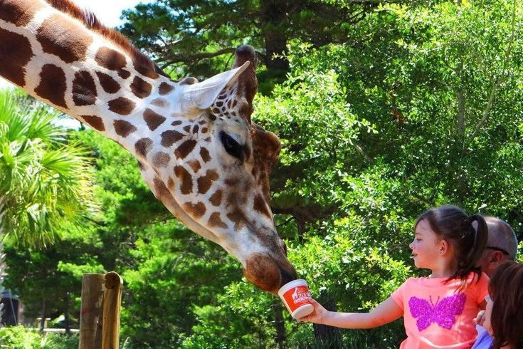 Gulf Breeze Zoo & Botanical Gardens: Destin Attractions Review - 10Best Experts and Tourist Reviews