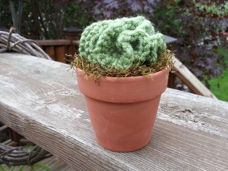 """Handmade, crocheted LETTUCE CACTUS in 3 1/8"""" Terra Cotta pot with Moss Soil. These realistic cactus mimic the frilly, leafy cactus and a great ornamental plant. These will live forever, with NO need for water or care.  If you would like to mix & match from collection ... Lettuce Cactus, Thumbs Up Cactus, Cross Cactus, Two Paddle Cactus, Star Cactus, Dark Barrel Cactus, Light Barrel Cactus, Saguaro Cactus, Four Paddle Cactus"""