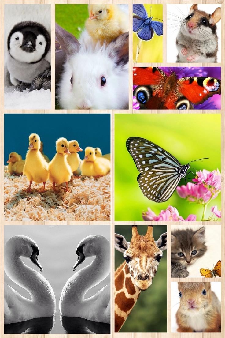 Lieve dieren