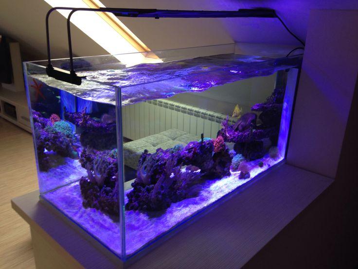 reefroom zemun reef portfolio akvarijum studio reefroom aquariums and fish tanks