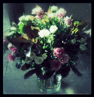 #roses #white&pink #vintage