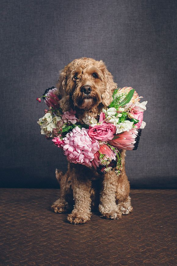 Dog-with-pink-floral-crown