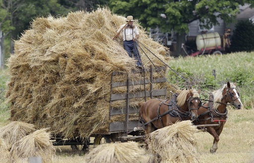 An Amish man sits on top of a wagon filled with hay, July 15, 2011, in Middlefield, Ohio.