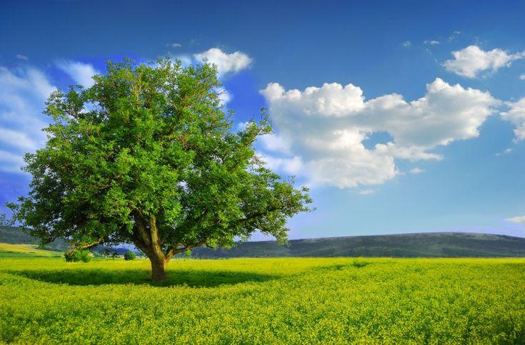 drzewa - Szukaj w Google
