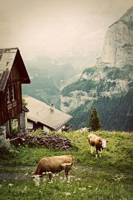 Morning in the Alps, Gimmelwald, Switzerland  (via Fine Art Photograph by AaronHuniuPhoto)
