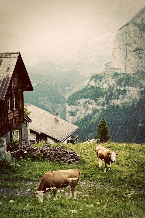 my Alps