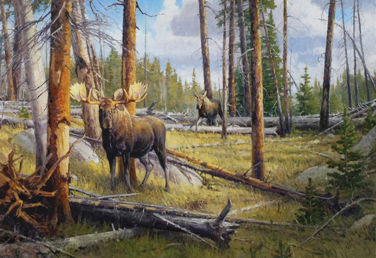 Ralph Oberg 1950 Present The Old Burn Wyoming Moose