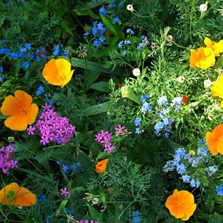 Who says you can't grow wildflowers in the shade? Partial Shade Wildflower Seed Mix - Wildflower Seeds from American Meadows