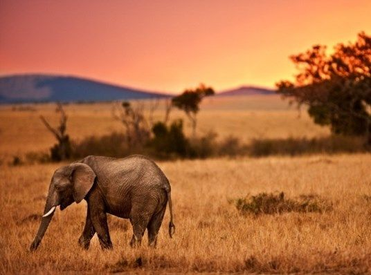 #KenyaSafaris would take you to Kenya, a land at the heart of the East Africa, straddling the equator known as the wild life documentary.  Know more @ http://kenya-safaris.weebly.com/home/kenya-safaris-join-in-the-action-and-adventure-to-get-a-touch-amazing