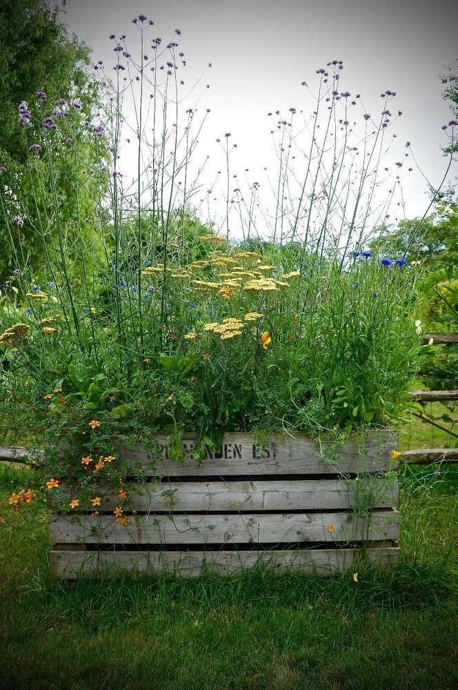 How to Create a Mini Meadow