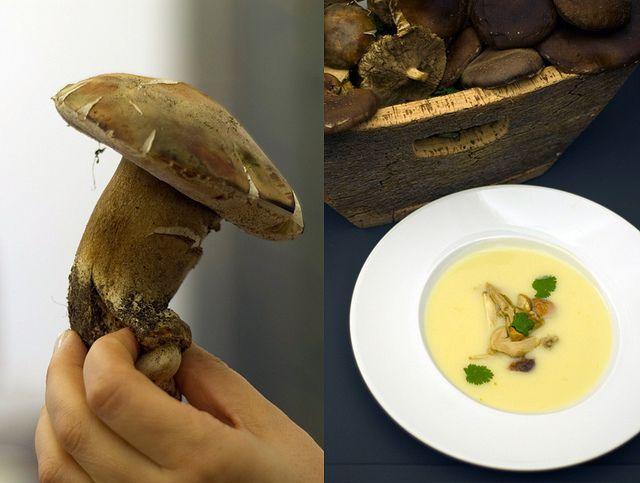 Sopa de couve-flor e cogumelos