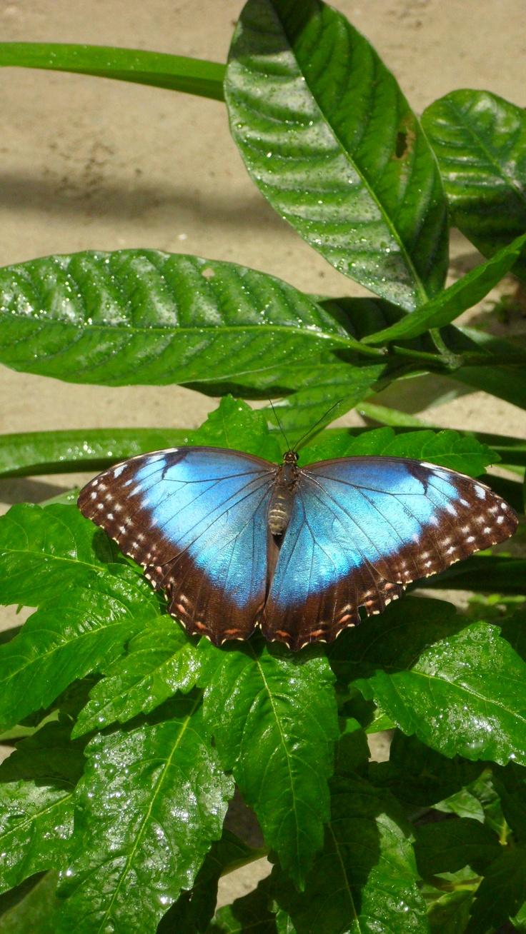 Butterfly garden in Aruba | Patrice\'s Budding Photography Career ...