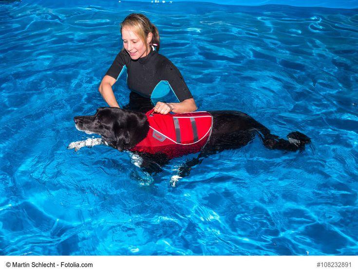 ✚ Physiotherapie für Hunde ist gar nicht mehr so selten. ✚ Aber was ist das eigentlich? ✚ Wann ist sie sinnvoll? ✚ Und was kostet sie?