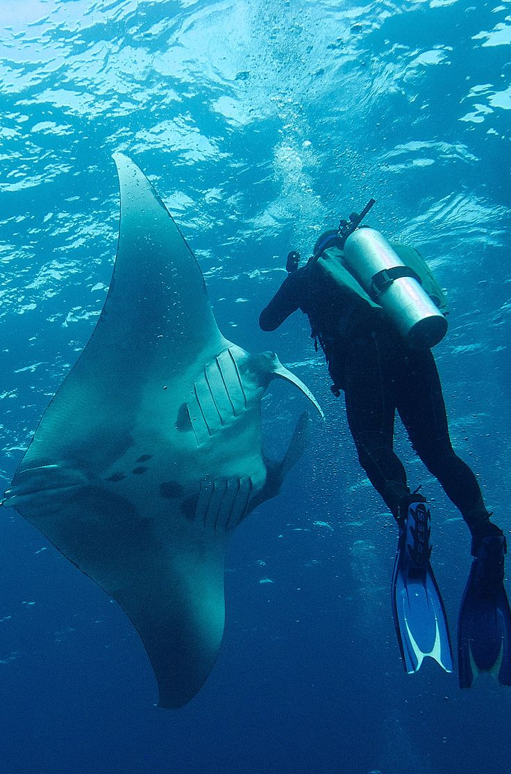 With clear blue, warm waters, and amazing marine life, Koh Samui is an extremely popular destination for both experienced divers and those wanting to take a dive course. Click through for more ideas on what to do here!