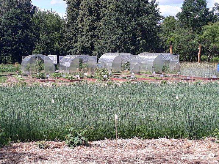 «Мы вложили средства не в картошку и капусту, а в экологическое образование».
