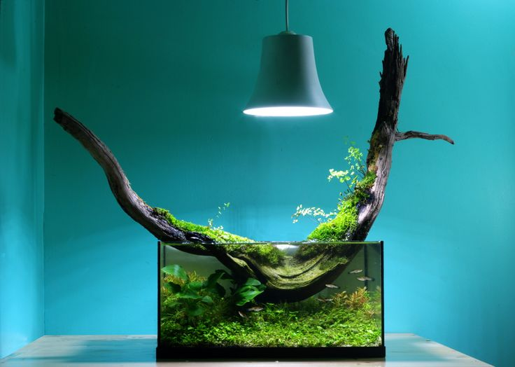 Literally thinking outside the box love the use of space - Petit aquarium design ...