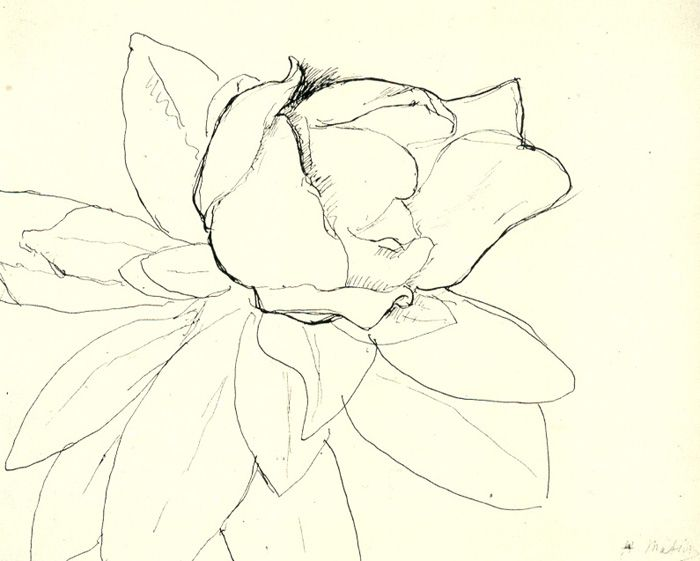 Matisse, Magnolia    pen and ink on paper  20.9 x 25.7 cm.  Private Collection  c. 1900