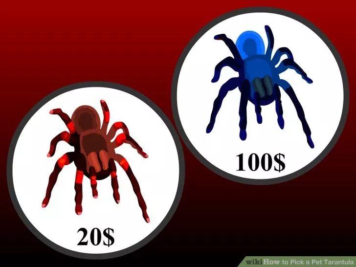 how to Pick a Pet Tarantula