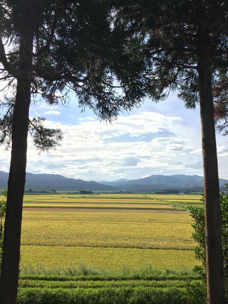 滋賀県高島市の田んぼ