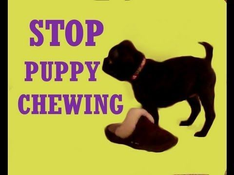 This Tutorial Is To Help Owners Train Their Pup Not To Chew On
