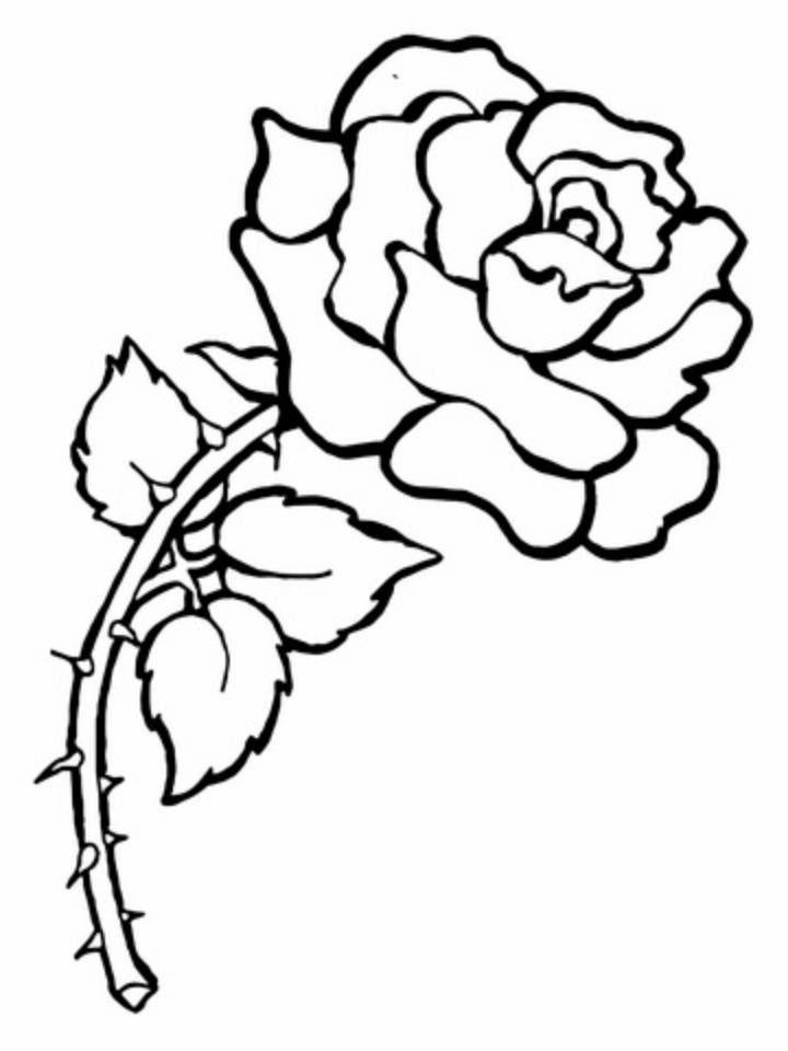 Desenhos De Rosas Para Imprimir E Colorir Desenhos Para