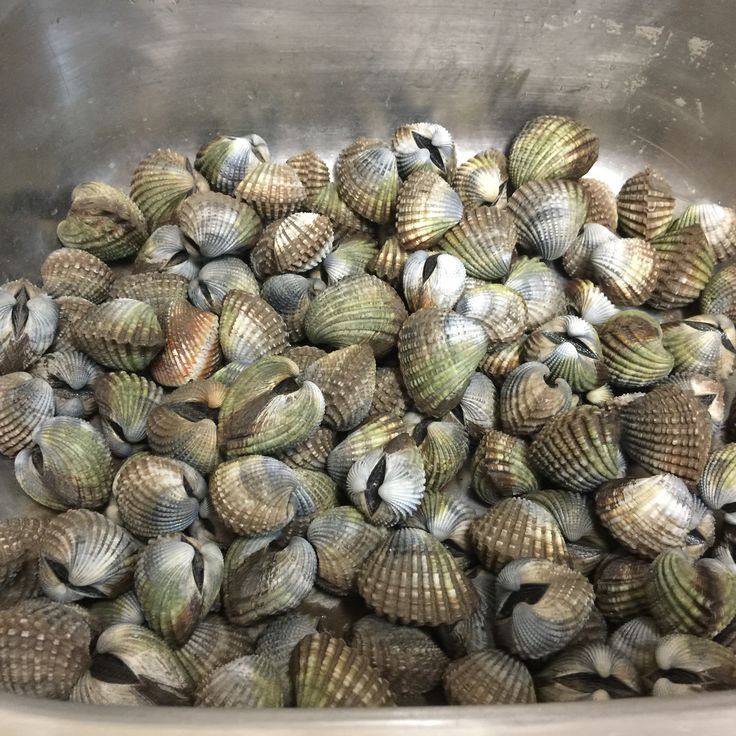 Broome Cockles