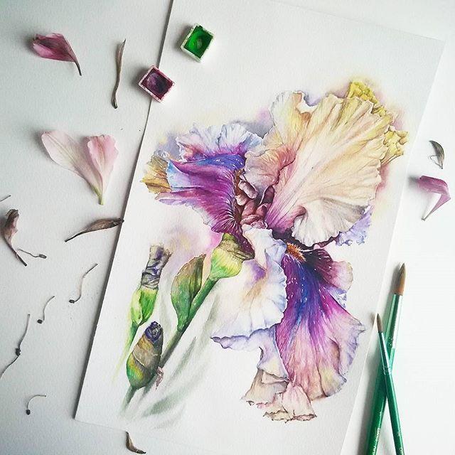 Хорошая музыка и цветы👉вот,что сейчас вдохновляет меня как никогда!!! А ведь ещё какой-то год назад ,я говорила,что цветы-это не моё😏 Теперь всё ясно!!Я просто не умела их готовить😊🌸🍴 #вишняобухова #рисунок #акварель #ботаническаяиллюстрация #ботаника #рисуйкаждыйдень #художник #иллюстрация #живопись #искусство #watercolour #watercolorgallery #aquarelle #akvarell #arts_help #arts_gallery #illustration #art_spotlight #spotlightonartists #picture #artfido #арт