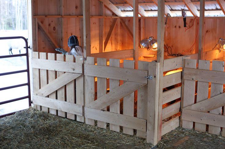 sheep shed - lambing