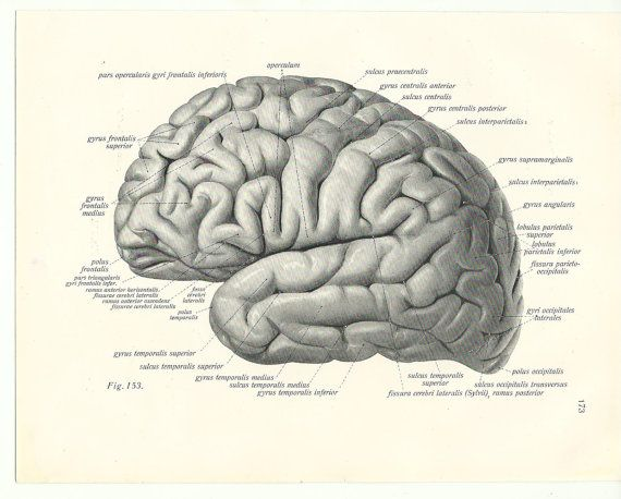 198 best vintage anatomical images on pinterest medical anatomy brain anatomy poster graduation gift vintage old page print anatomy human body medical drawing anatomic anatomical hannibal ccuart Image collections