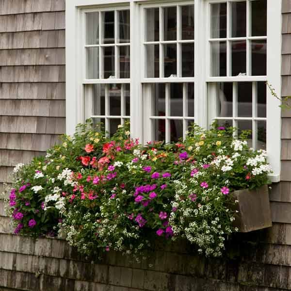 plant a better window box garden balkon. Black Bedroom Furniture Sets. Home Design Ideas