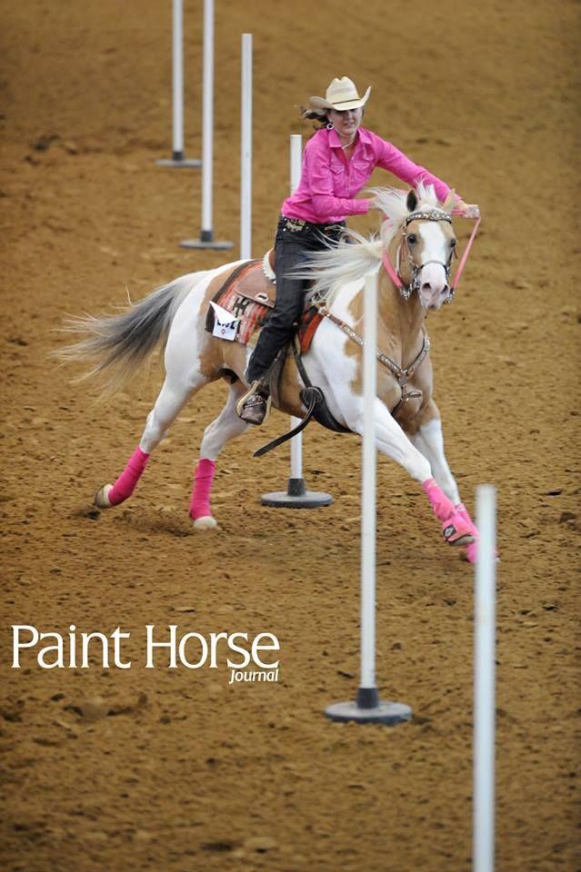 Pole bending paint horse