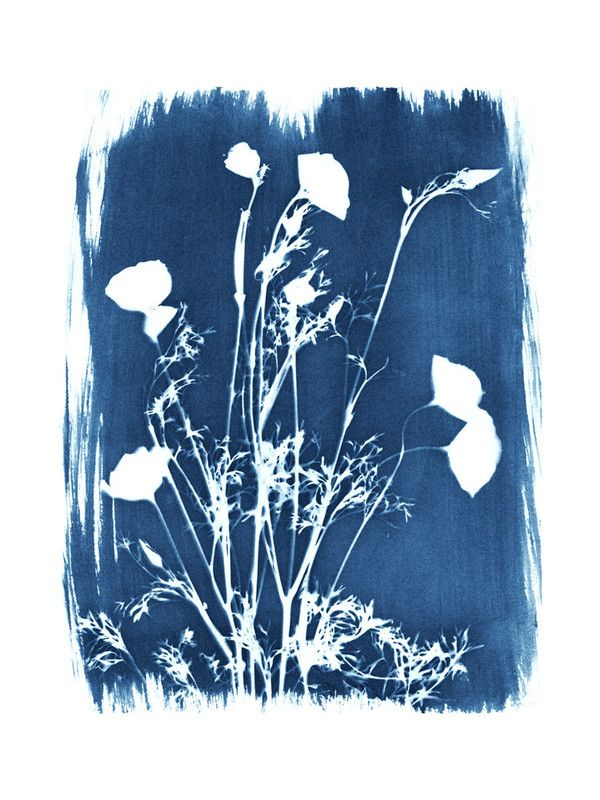 """Golden Blue Poppies"" by raven erebus in beautiful frame options and a variety of sizes."