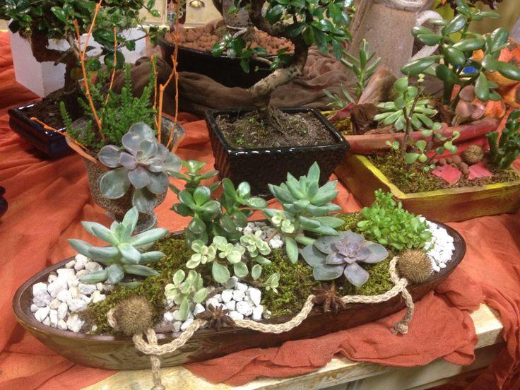 Succulents in a wood www.e-fertilia.gr