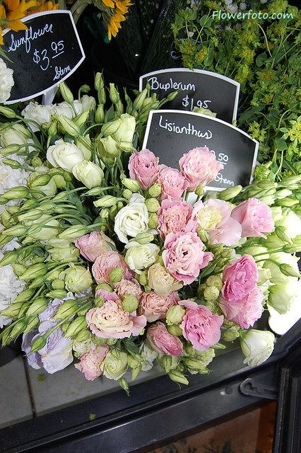 """Lisianthus (Eustoma) """"Dissolution"""" or """"Appreciation"""" This beauty in all of it's…"""